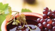 Israel Wine Spectator
